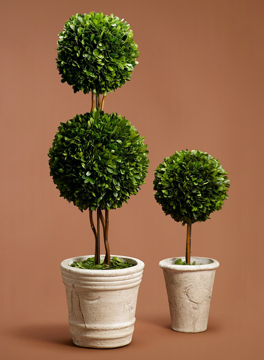 Boxwood Ball Topiaries
