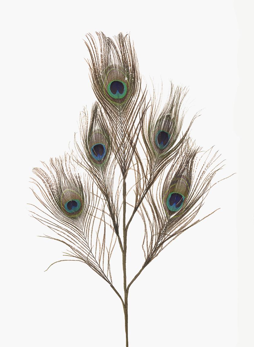 Peacock Eye Feather Pick