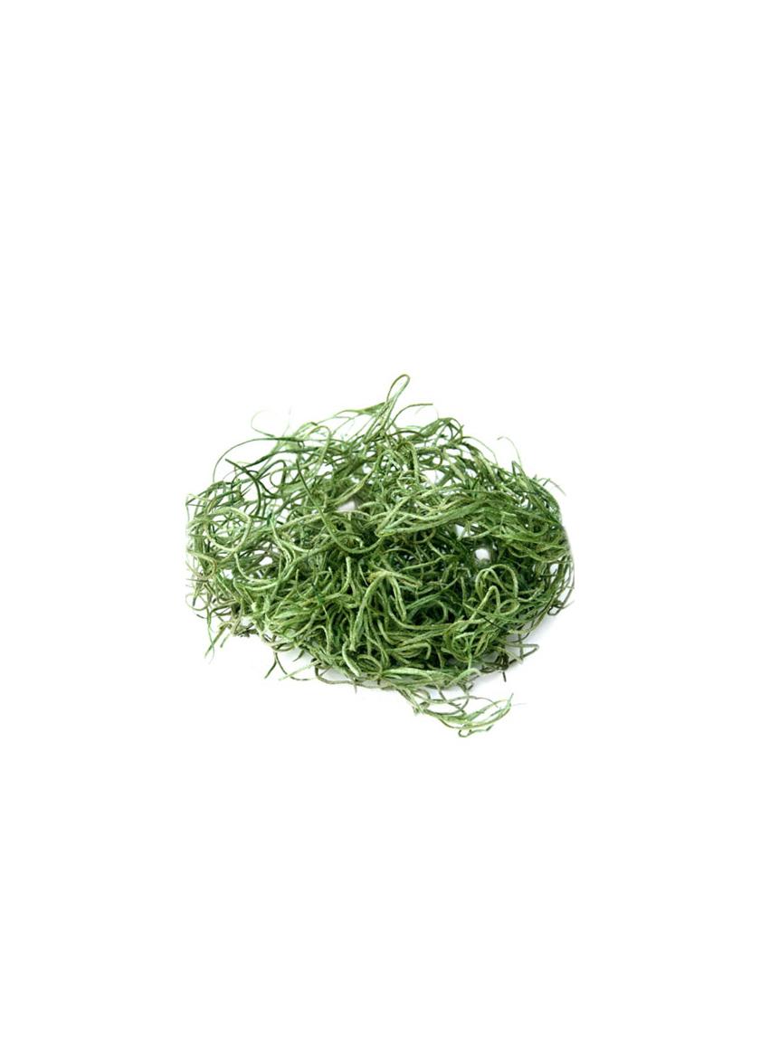 SuperMoss Grass Green Preserved Spanish Moss