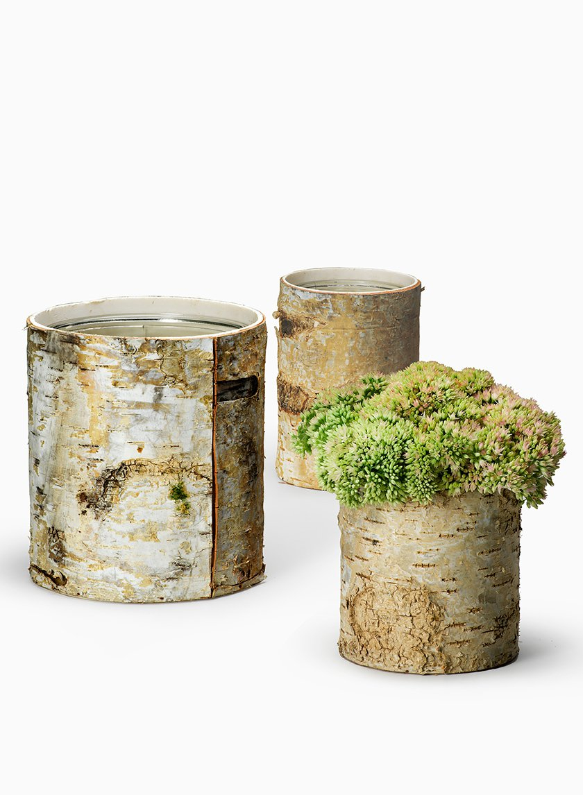 Round White Birch Vases