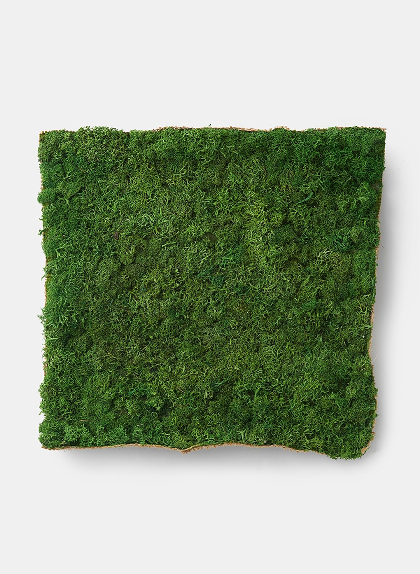 12in Reindeer Moss Square 24919
