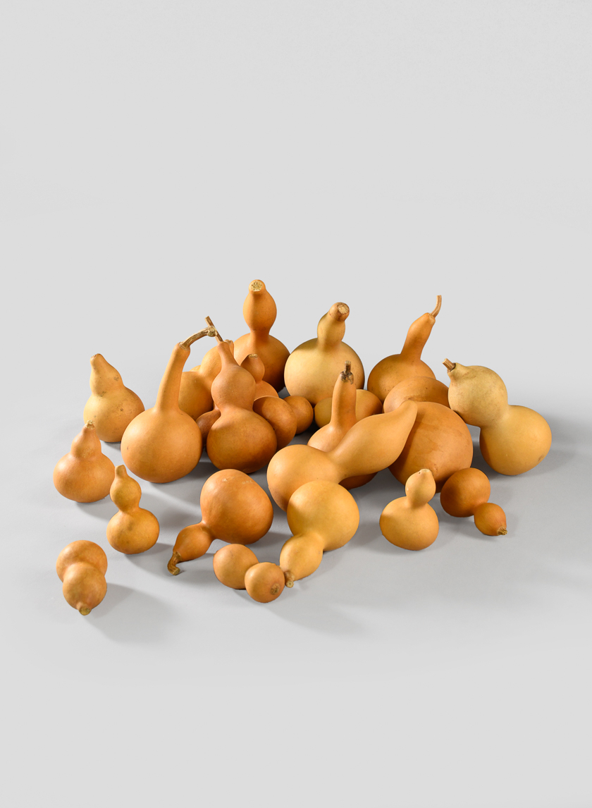 Small Brown Gourds Mix