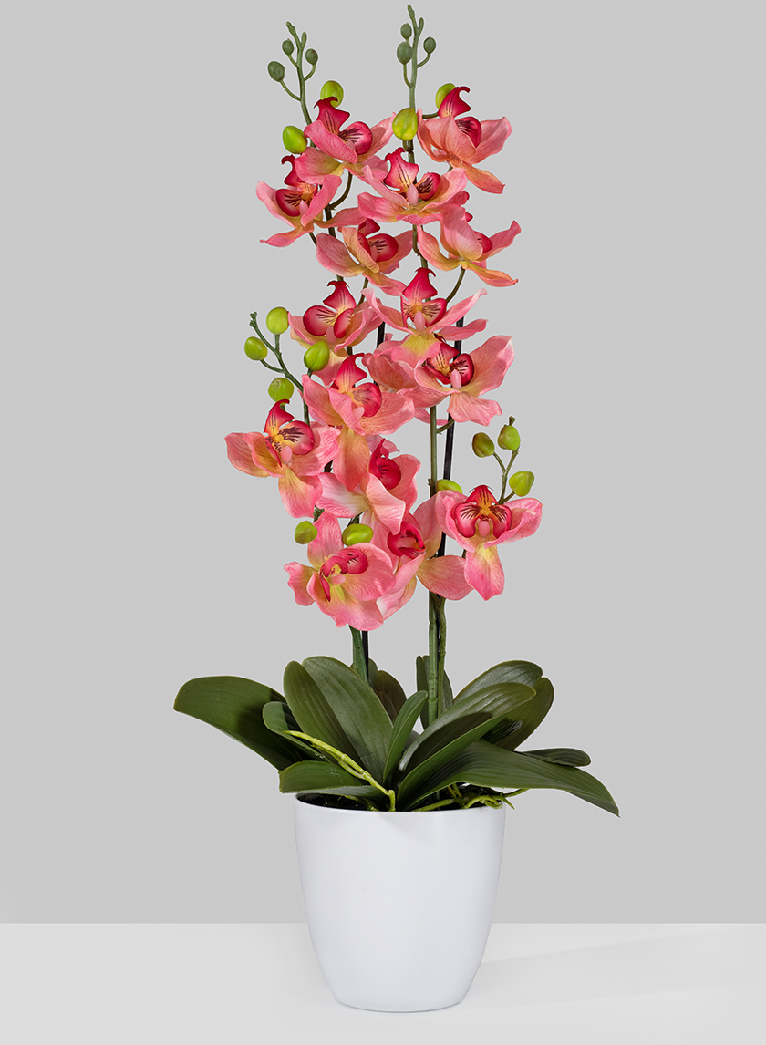 Pink Orchid In Pot