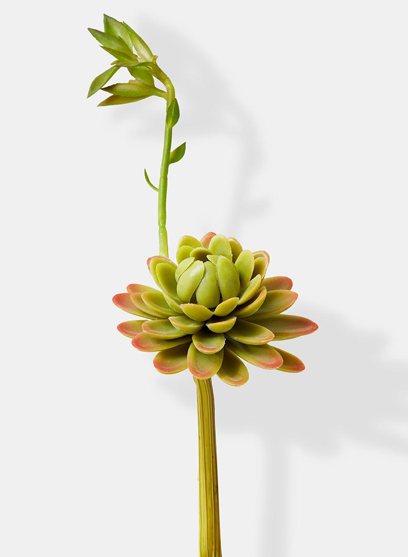 9in Single Succulent