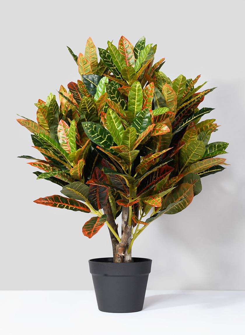 31in Croton Tree