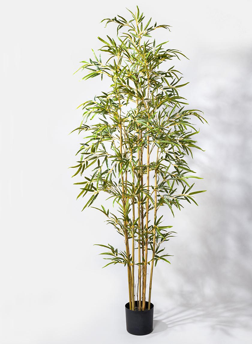 6ft Pot Bamboo Tree
