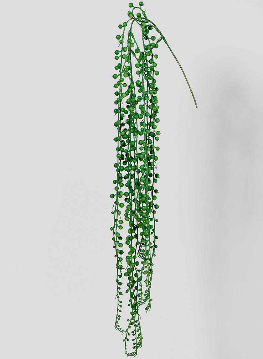 String Of pearls Pick Senecio