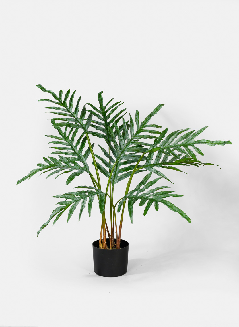 32in Oak Leaf Fern Plant
