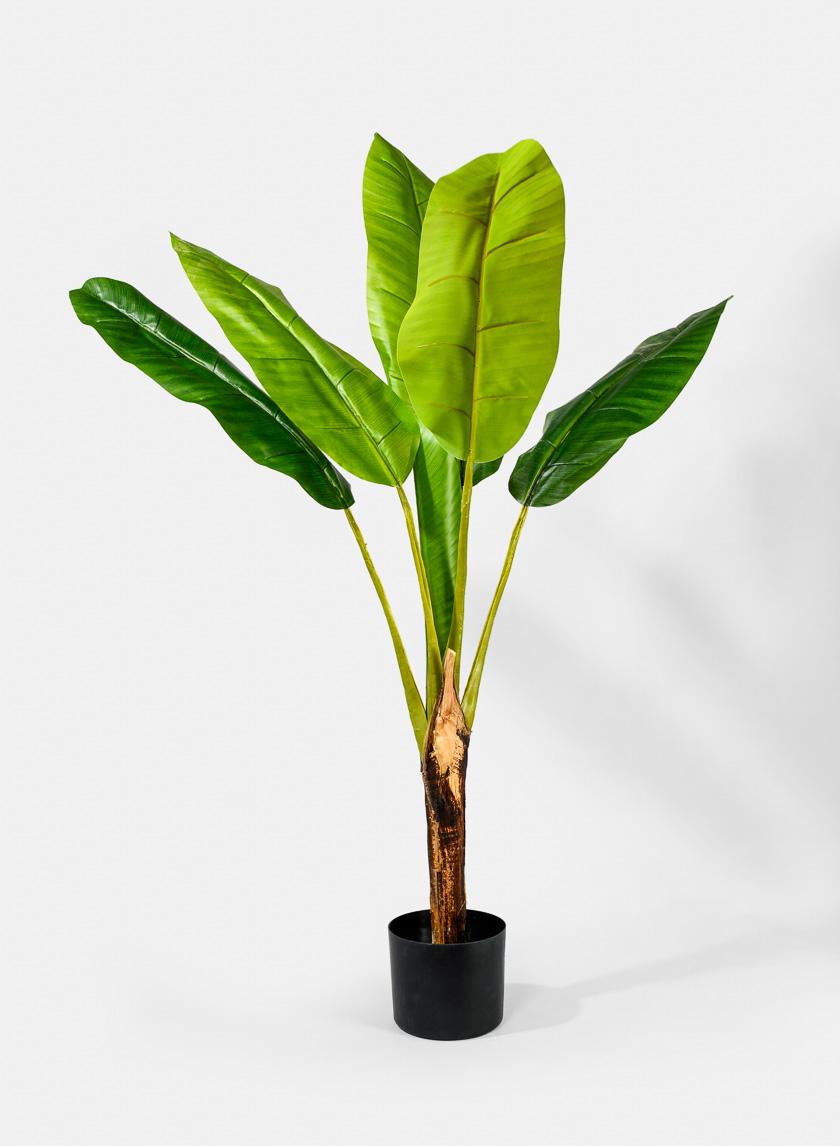 44in Banana Plant