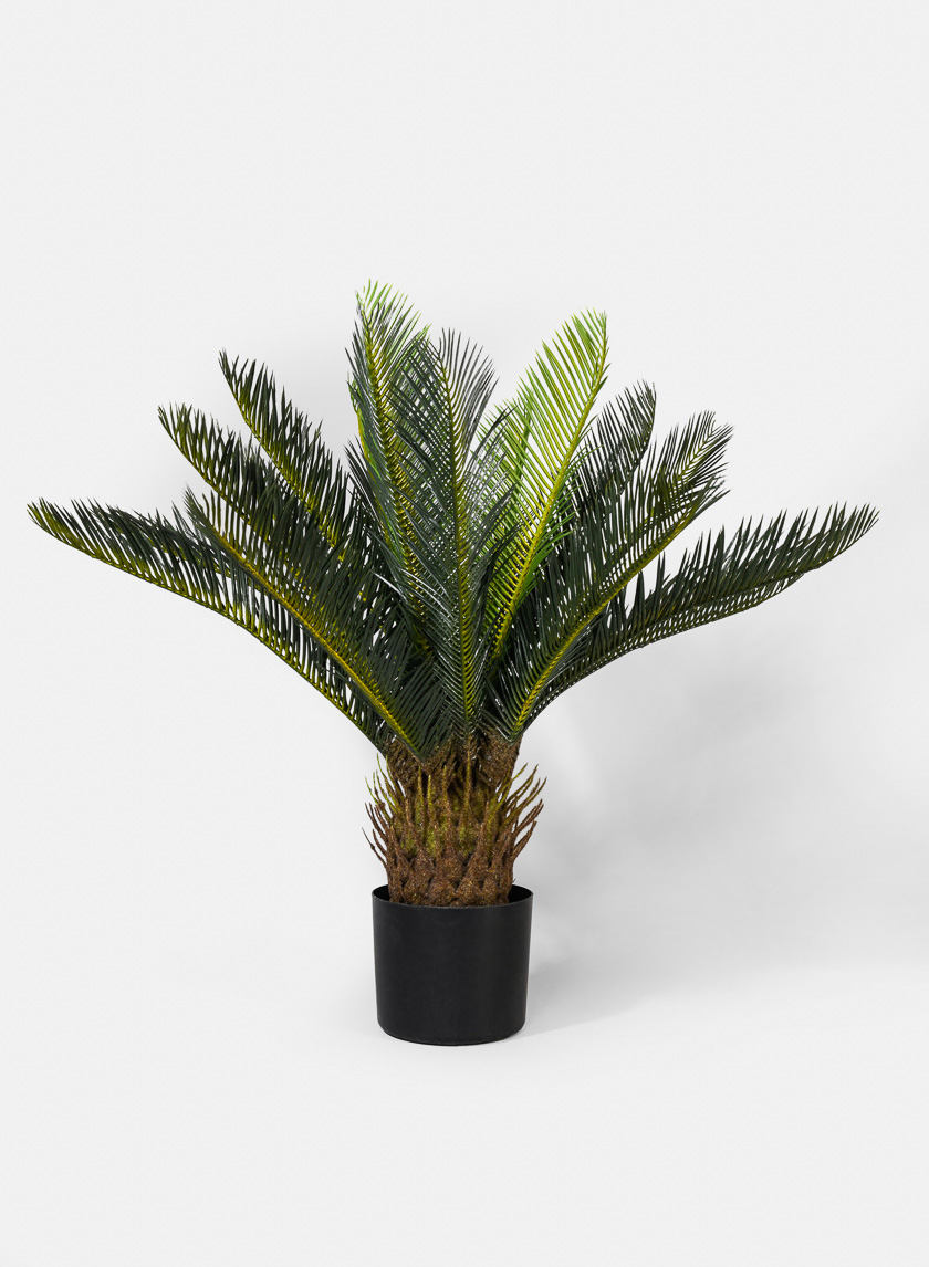 27in Sago Palm Tree