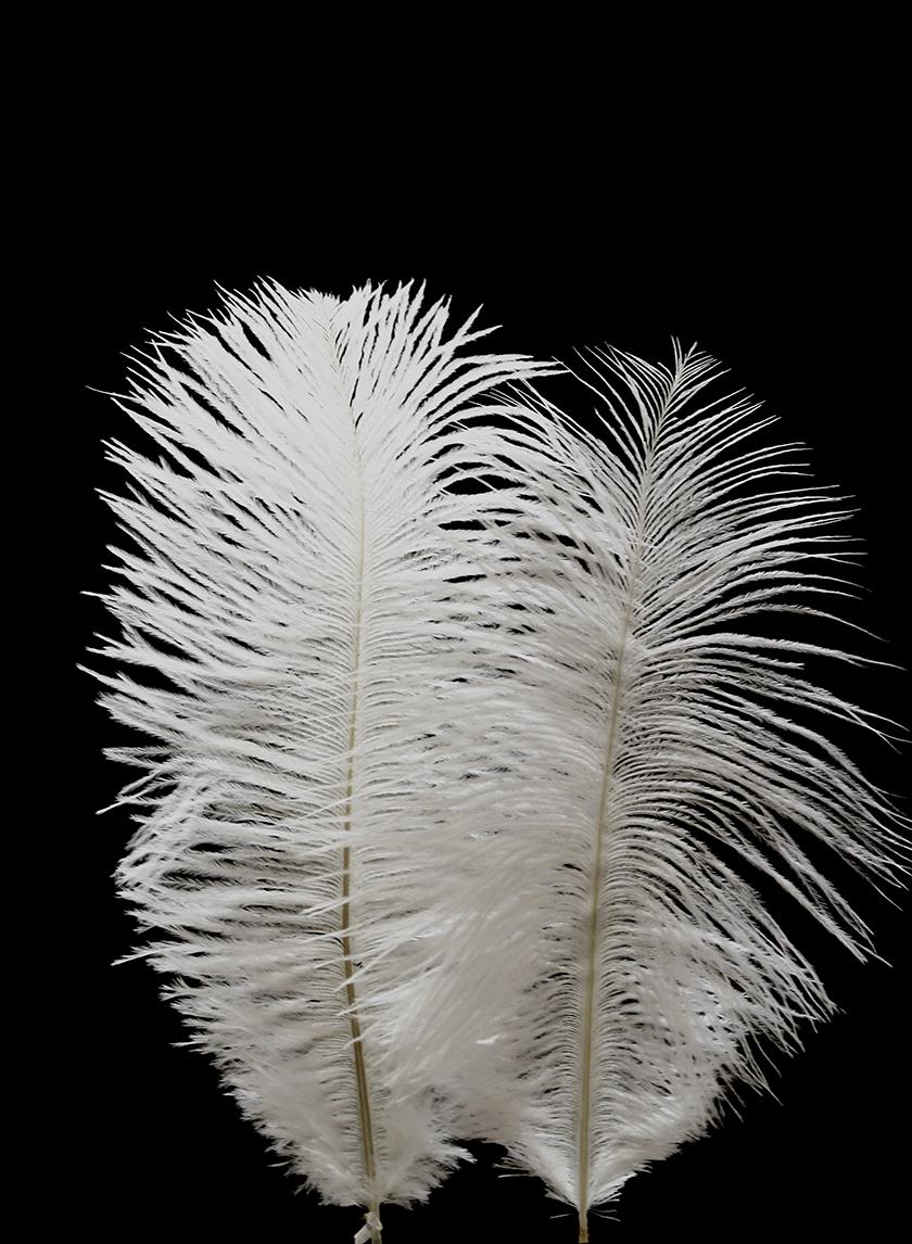 White mini ostrich feathers