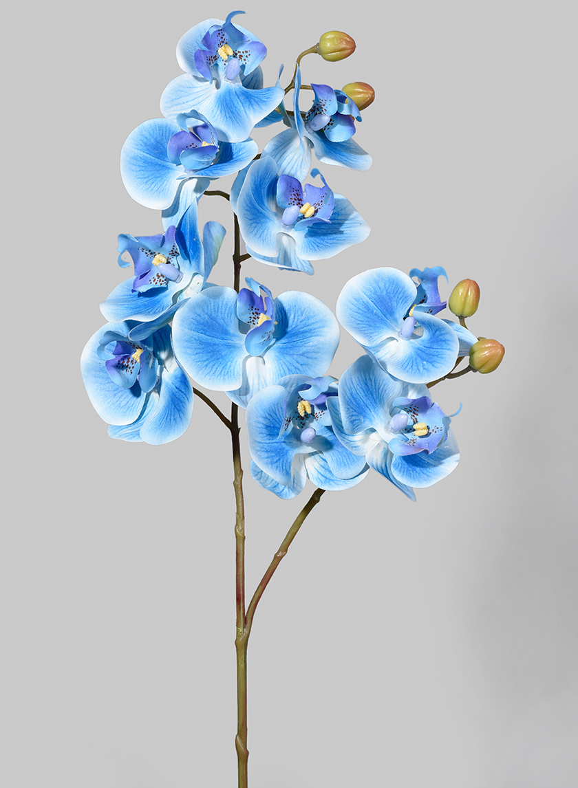 31in Real-Touch Blue Butterfly Orchid