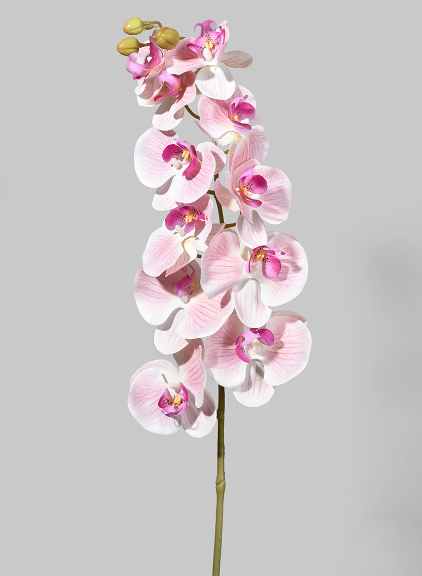 49in Real-Touch Light Pink Butterfly Orchid