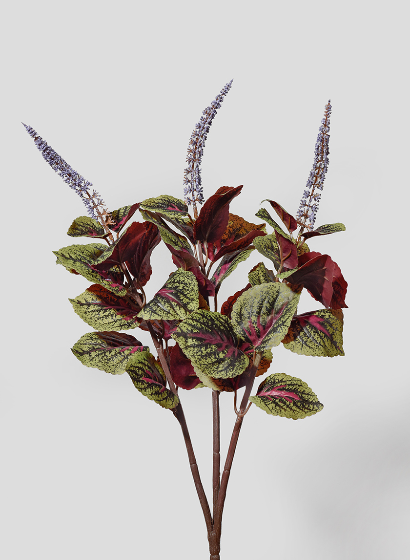 20in Red & Green Perilla Leaf Bush