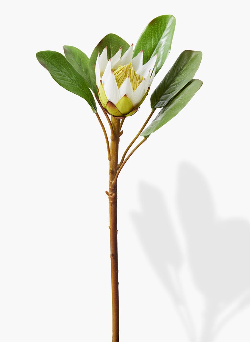 22in White Protea Spray