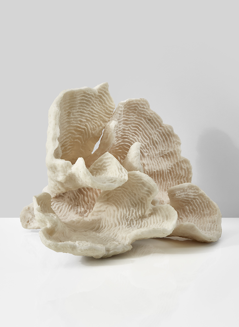 artificial plate ocean coral