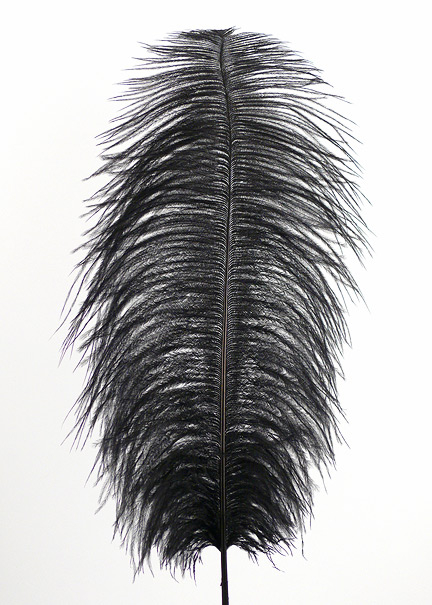 18 - 20in Black Ostrich Feather
