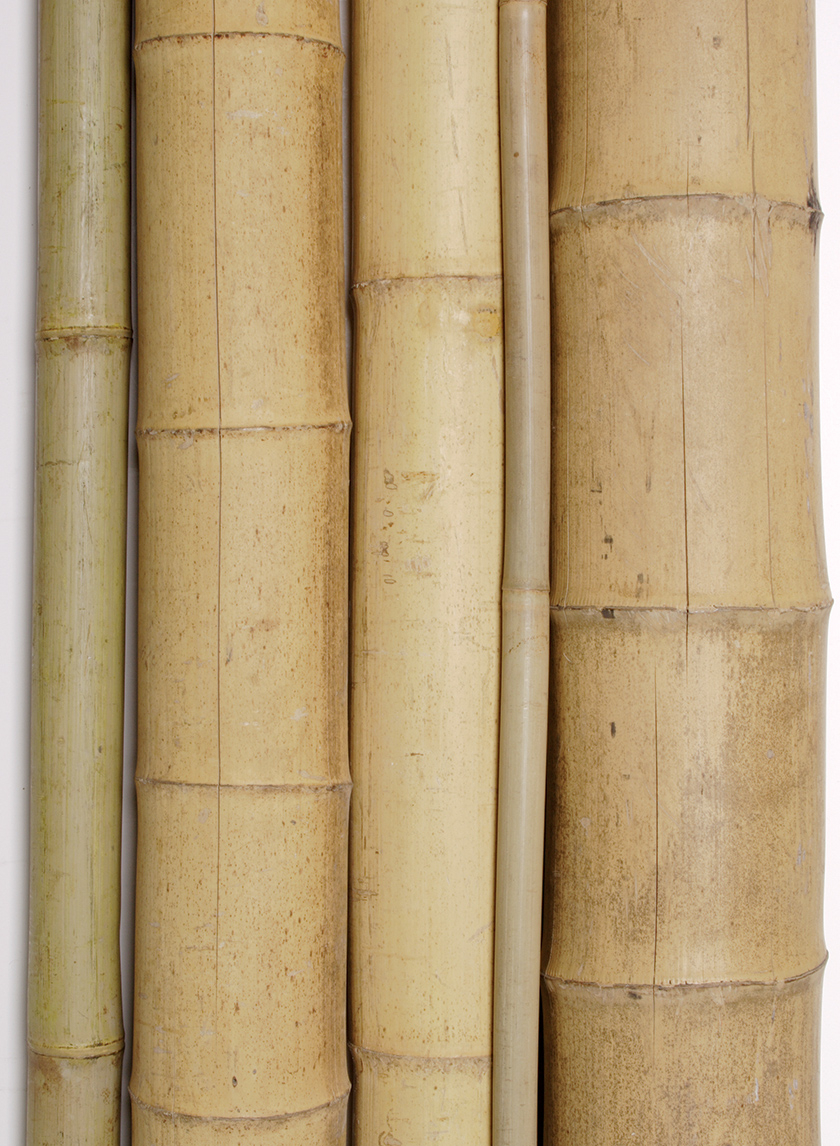 1-, 1 1/2-, and 2-inch Dia. Natural Bamboo Stakes