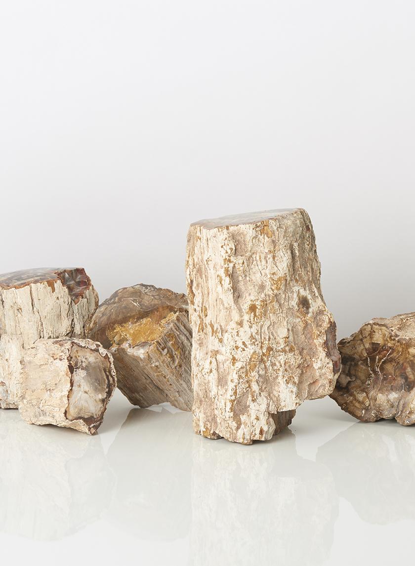 3-9in Petrified Wood Mini Trunks