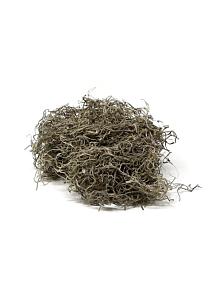 natural spanish moss
