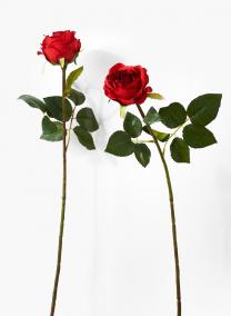 25in Medium Red Prize Rose Bud