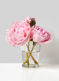 pink peony floral arrangement in glass julep cup vase with gold edge