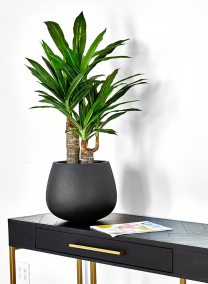 fake Dracaena potted plant for office hotel lobby decor