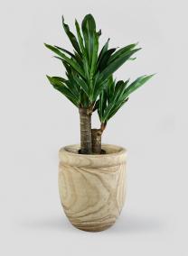 16in Rolled Rim Paulownia Wood Planter