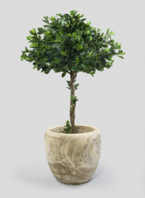 18in Tapered Paulownia Wood Planter