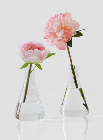 lab glass bud vases