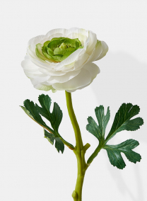 white ranunculus silk flowers