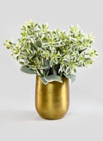 5in H Raw Brass Round Pot