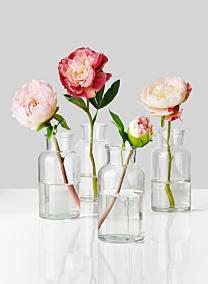 peony in glass bottle bud vases