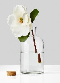 white magnolia in glass bottle vase