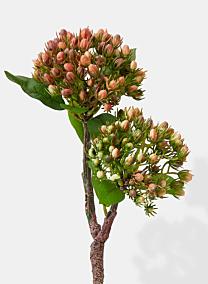 pink hypericum berries filler flowers