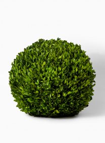 16in preserved boxwood ball retail window display