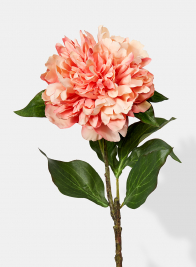 22in Frilly Peach Peony