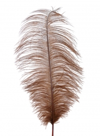 18 - 20in Brown Ostrich Feather