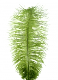 18 - 20in Green Ostrich Feather