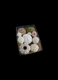 Assorted Sea Urchins in Acetate Box