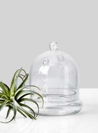 small glass bell jar terrarium