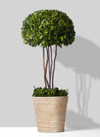 Half 14-inch Boxwood Ball Topiary