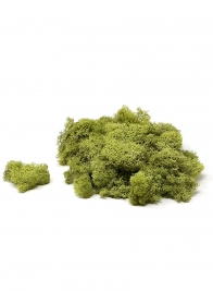 reindeer moss chartreuse green supermoss