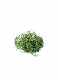 SuperMoss Grass Green Preserved Spanish Moss
