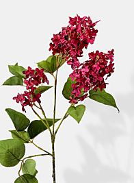 burgundy lilac flowering stem