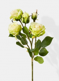 pale yellow cherry rose permanent botanicals