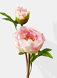 light pink peony flower stems