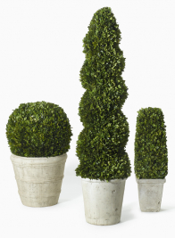 Boxwood Round, Spiral, & Square Topiaries