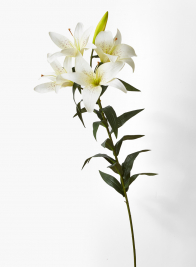37in Cream King Lily