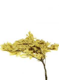 Transparent Yellow Oak Leaves
